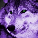 Purple Wolf's Avatar