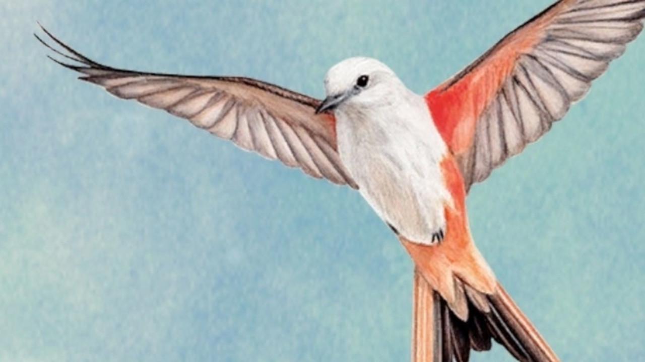 wingspan_box_art